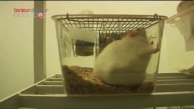 Couverture hypothermique : tout pour préserver le cerveau des bébés – Reportage dans les laboratoires et au service de néonatalogie de l'hôpital Robert-Debré (Paris). Vidéo du 8 avril 2010