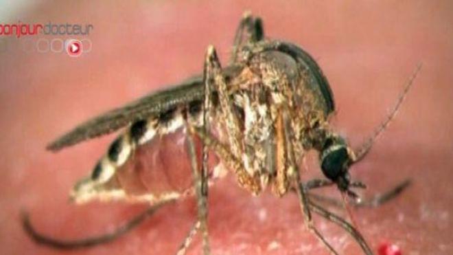 Un nouveau vaccin contre le paludisme