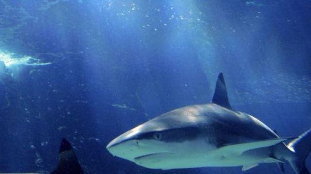Des requins à votre secours
