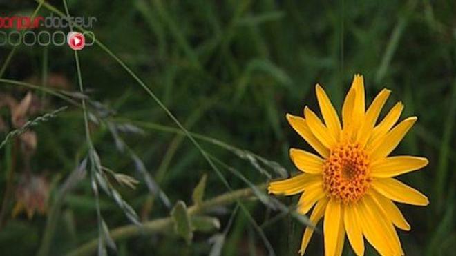 Ces plantes qui soulagent vos douleurs