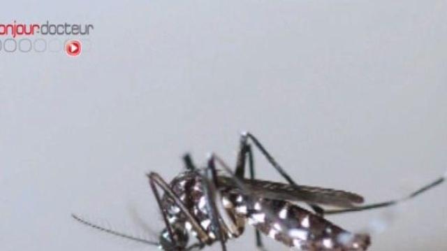 Le moustique tigre poursuit sa progression en métropole
