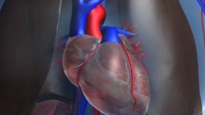 Avec l'âge, la masse du coeur évoluerait différemment selon le sexe