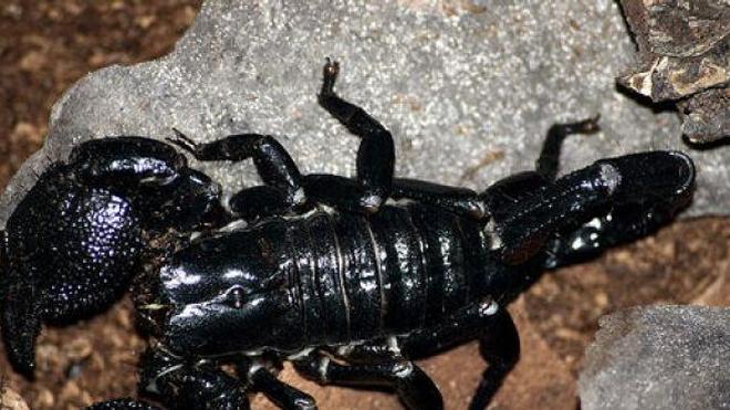 Paralysée après une piqûre de scorpion