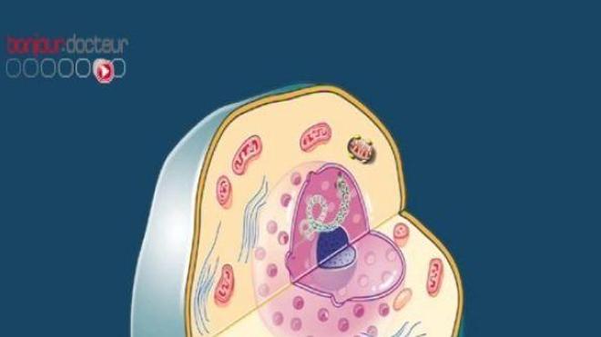 Cancer : vers des traitements individualisés