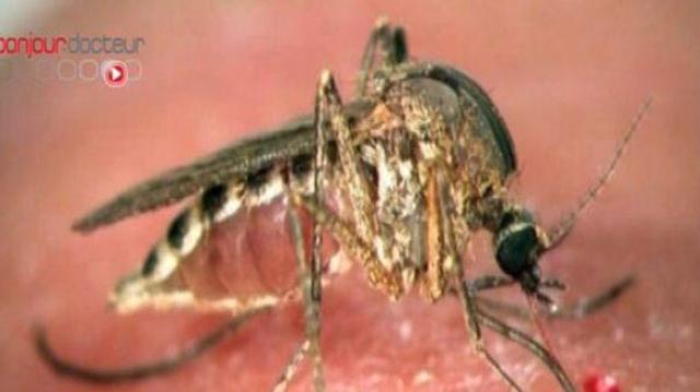 Le secret des peaux à moustiques décrypté