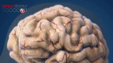 Des cerveaux plus ou moins motivés ?