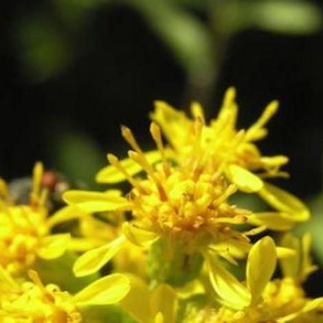 Des plantes pour soulager vos douleurs articulaires