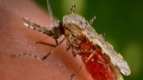 Piqûres d'insectes : des traitements inefficaces