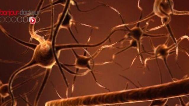 Désirer, convoiter, envier : une affaire de neurones