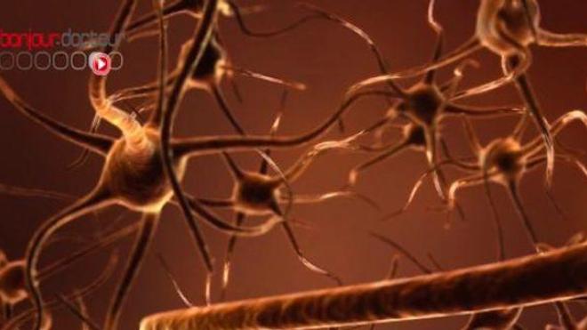 Perdons-nous vraiment des neurones dès la fin de l'adolescence ?