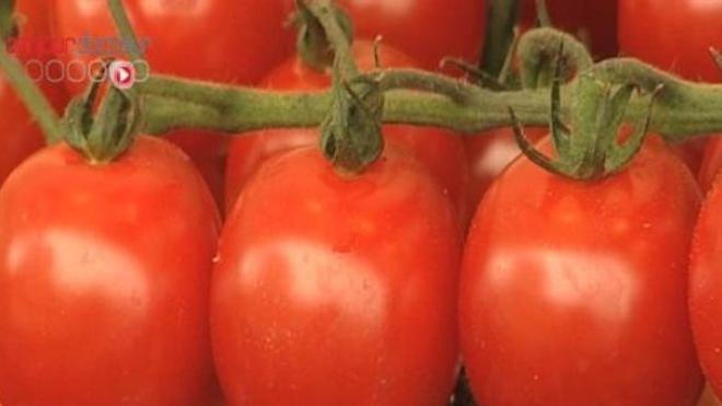 La tomate sous toutes ses formes
