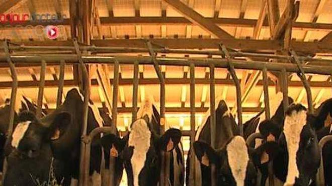Modéliser les épidémies animales pour mieux les surveiller