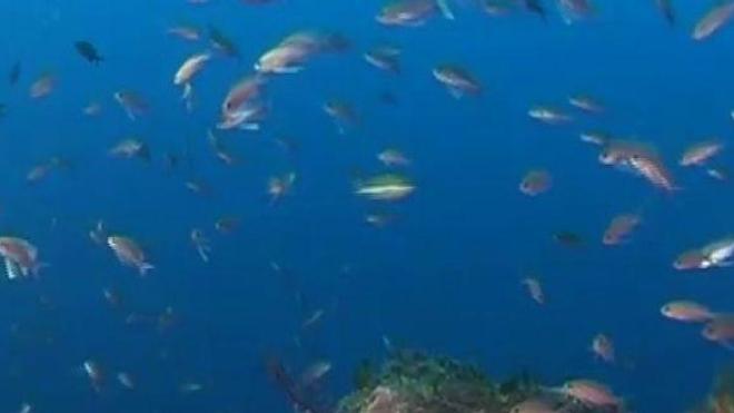 Cancer de la peau : les poissons aussi