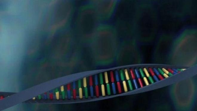 Paludisme : le génome de deux parasites séquencé