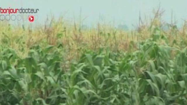 OGM : saisine immédiate de l'Agence nationale de sécurité sanitaire