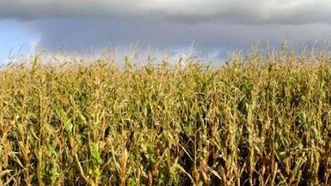 Pour l'étiquetage systématique des OGM sur les produits alimentaires?