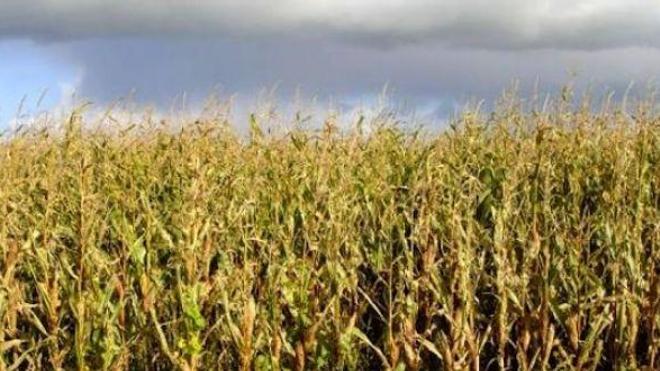 OGM : le ministre de l'Agriculture critique le flou juridique européen