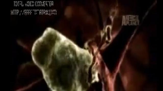 Une amibe dévore le cerveau de dix Pakistanais