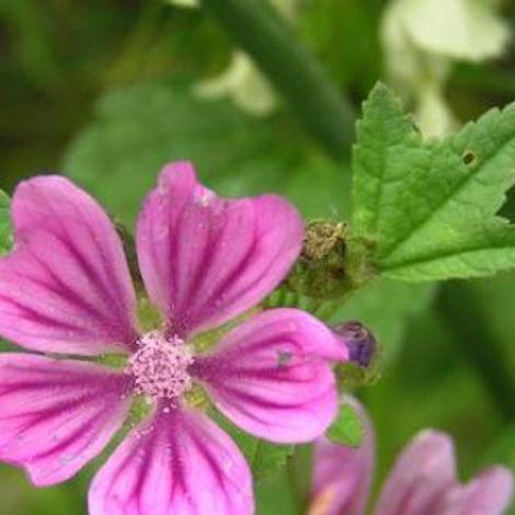 Problèmes respiratoires : et si on essayait les plantes !