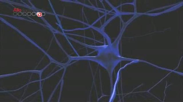 Human Brain Project : un modèle pour mieux comprendre le cerveau