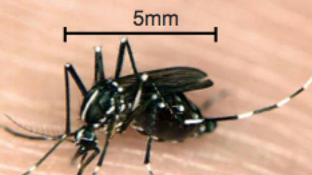 Le retour de la dengue en Europe
