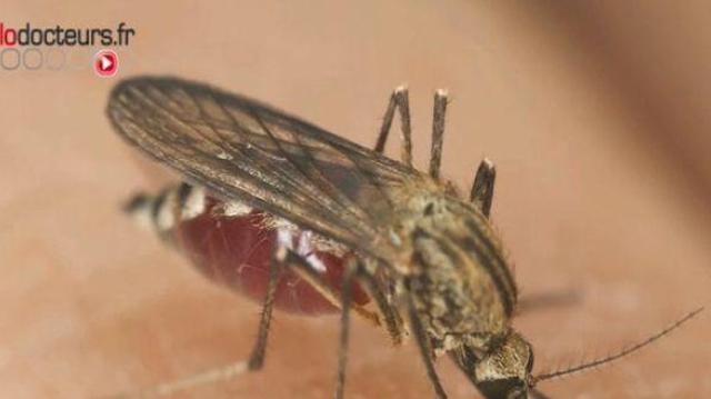 Paludisme : un médicament traditionnel chinois livre son secret