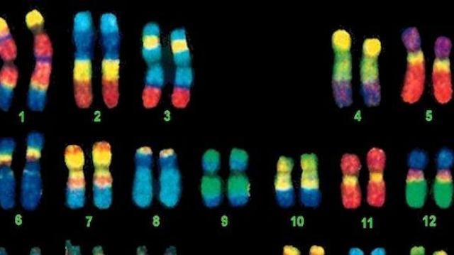 Des variants génétiques pour expliquer la longévité des Crétois