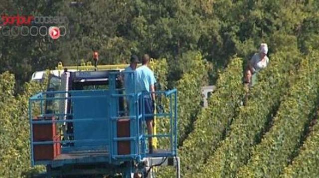 Pesticides : des viticulteurs empoisonnés jusqu'à la racine