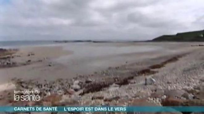 Un ver marin aux vertus miraculeuses - Reportage réalisé en 2009