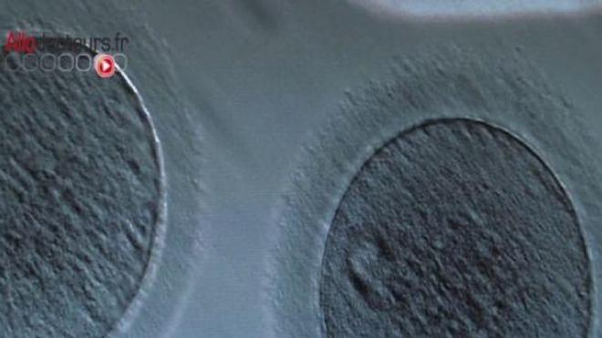 Des ovules en poudre ?