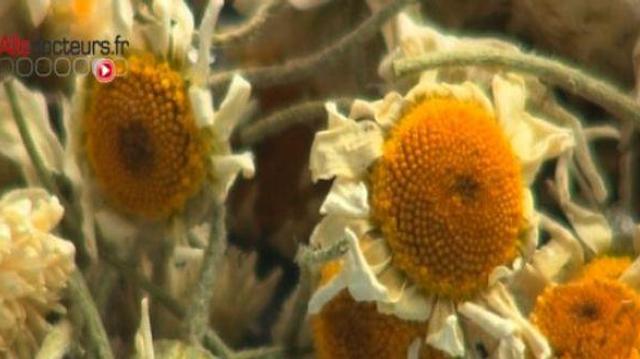 Il existe plus de 28.000 plantes médicinales
