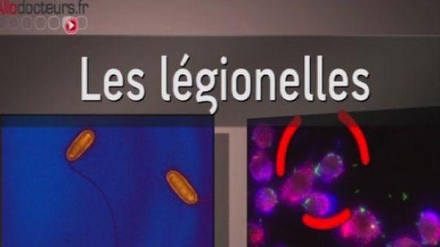 Légionellose : comment le bacille entrave les défenses cellulaires