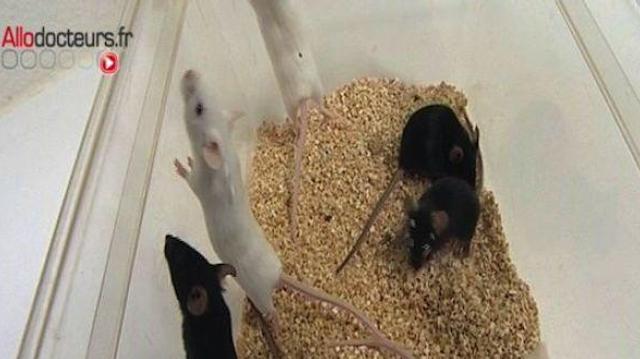 Des souris spationautes pour modéliser les maladies osseuses et musculaires