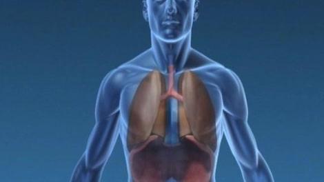 Elle guérit d'une forme grave de Covid grâce à une double greffe de poumons