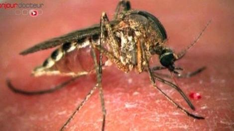 Zika et dengue : les autorités sanitaires appellent à la vigilance