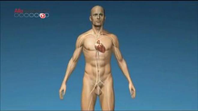 Le coeur artificiel Carmat : explications en vidéo du 10 juin 2013