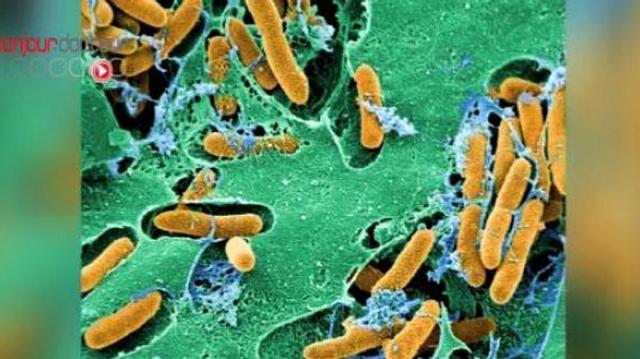 Résistance aux antibiotiques : des clés pour la combattre